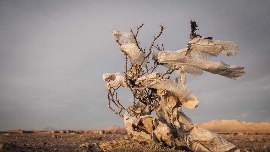 """Fotografia """"Árvores de Plástico"""" de Eduardo Leal"""