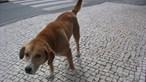 Cão atingido por chumbo na rua