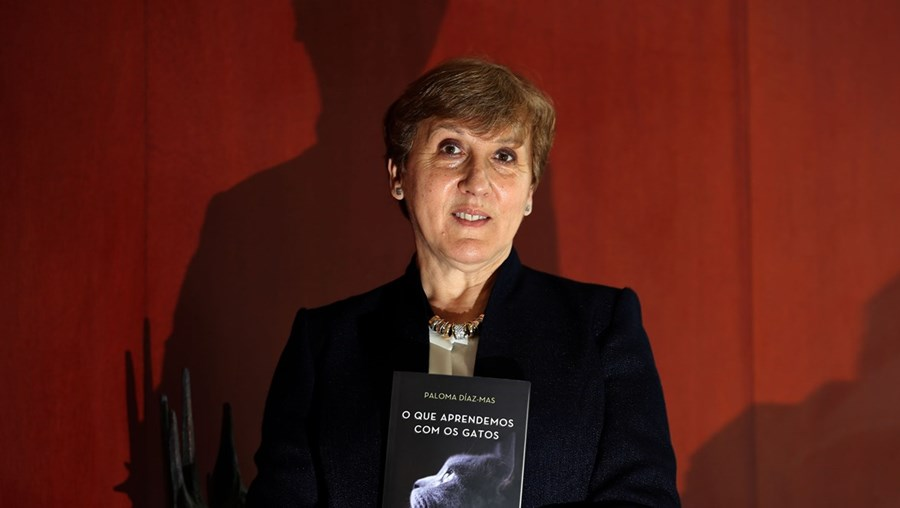 'O que aprendemos com os gatos' é o primeiro livro da autora publicado no nosso país