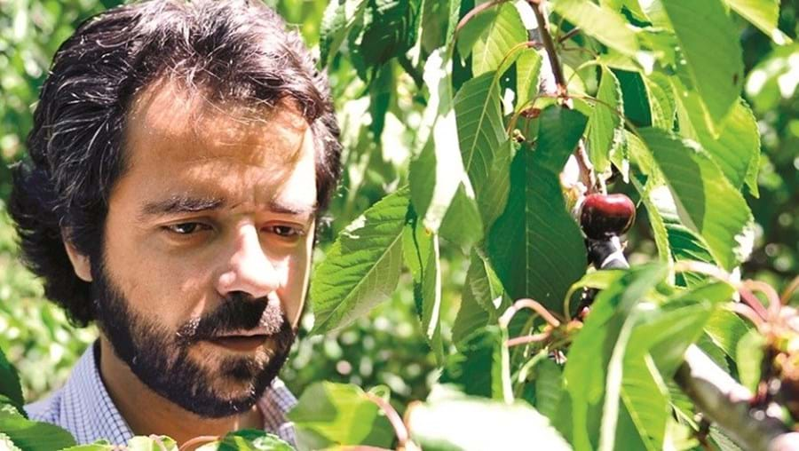 O produtor de cereja José Pinto Castello Branco