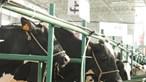 Governo anuncia novas medidas para reforçar apoios ao setor do leite