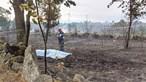 Morre queimado a salvar ovelhas