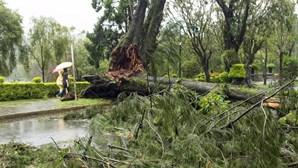 Tufão Goni deixa dez mortos nas Filipinas