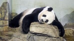 Panda Mei Xiang deu à luz gémeos