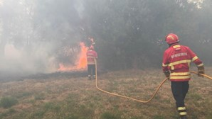 PJ deteve suspeito de atear dois fogos em Viseu