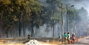População de casas de Azeitão ajudou os bombeiros com baldes de água
