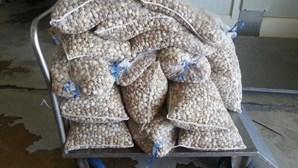 GNR apreendeu 2.640 quilogramas de amêijoa em Alcochete