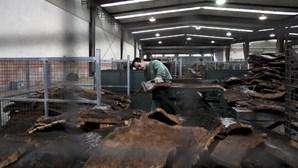 Lucros da Corticeira Amorim cresceram 15,1% no primeiro semestre para 39,4 milhões de euros