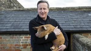 Obscenidade com porco trama Cameron