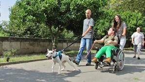 Cadela de sem-abrigo ajuda deficientes