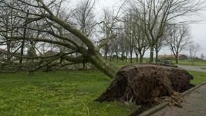 Queda de ramo de árvore em Sintra provoca dois feridos