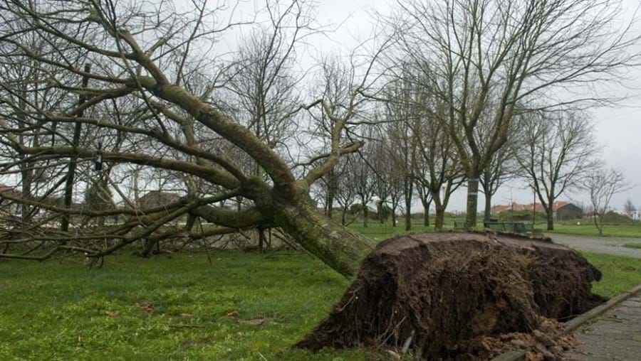 Caíram algumas árvores de grande porte