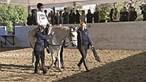 Equitação terapêutica ajuda crianças e jovens