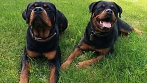 Raças de cães potencialmente perigosas