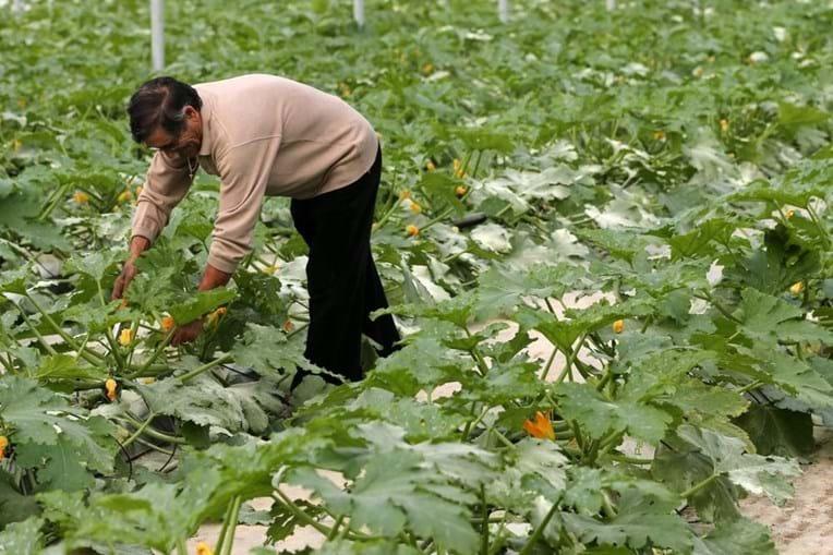 Cerca de 50% da produção agrícola em Portugal é gerida por idosos
