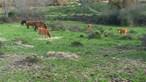 Ministério recolhe mais de 100 animais de exploração