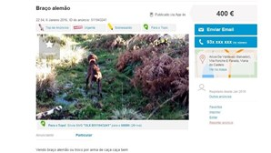 Cães trocados por armas em sites de classificados