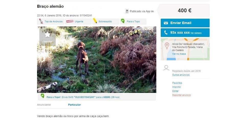 Este cão é trocado por arma de caça num anúncio publicado no OLX
