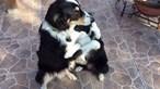Abraço entre cães emociona o Mundo