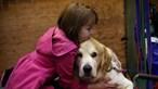 Abraços a cães desaconselhados
