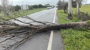 A Estrada Nacional 252, que liga Évora ao Redondo, esteve no domingo cortada devido à queda de uma árvore