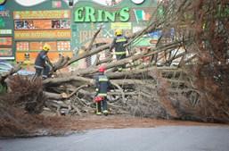 O vento forte derrubou no domingo uma árvore de grande porte, que atingiu quatro carros estacionados