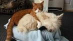 Cães e gatos vão dar bónus de  250 euros no IRS