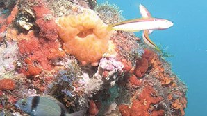 Recife natural gigante alberga 800 espécies e alga protegida