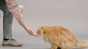 Aparelho traduz 'miaus' em voz humana