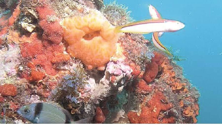 Espécies marinhas variadas vivem no recife natural de Armação de Pera