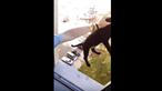 Jovem filma-se a maltratar cão