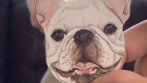 O truque para fazer um bulldog sorrir