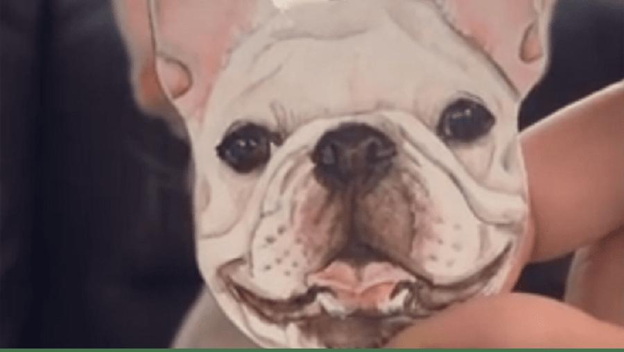 Dono de um pequeno bulldog encontrou a forma de conseguir uma cara alegre do cão