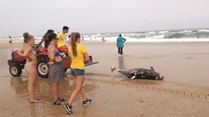 Mortes no mar devido a capturas e colisões