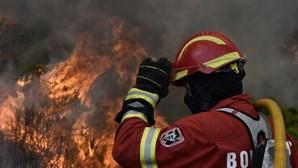 Fogo lavra em área de pinhal em Moura