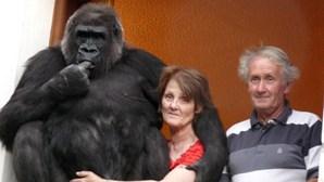 Casal proibido de sair à noite depois de adotar gorila