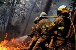 Fogo está a ser combatido por bombeiros da Madeira apoiados por reforços do Continente e Açores