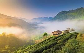 Neste paraíso verde, antigos campos de ópio deram lugar a arrozais