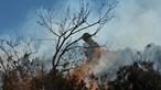 Quatro concelhos da Guarda e Castelo Branco em risco máximo de incêndio