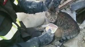 Gato resgatado dos escombros ao fim de 16 dias
