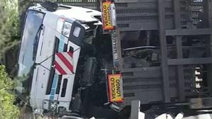 Acidente com camião fere motorista e corta A33