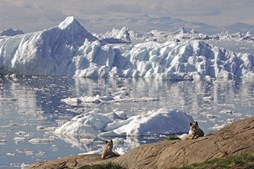 Os cães de trenó da Gronelândia tem sempre dono, apesar de estarem por toda a parte