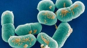 Bactéria Legionella