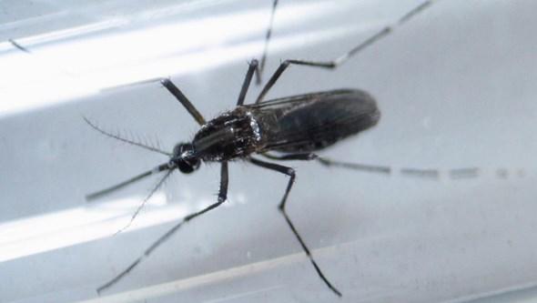 Vírus Zika pode transmitir-se pelas lágrimas