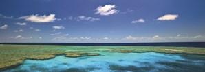 Mais de 1500 espécies de peixes, 3 mil de moluscos e cerca de 215 de aves, juntamente com esponjas, anémonas e tartarugas marinhas, vivem juntos na Grande Barreira de Corais australiana