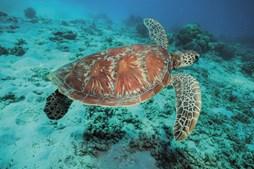 A fauna marinha é uma das mais diversas do planeta. Mergulhar aqui é como entrar noutra dimensão