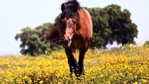 """Faz sexo com égua e afirma que animal o """"seduziu"""""""