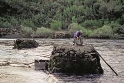 Pesca da lampreia  no rio Minho ainda  é artesanal