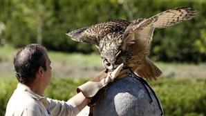 Falcoaria portuguesa é património imaterial da Humanidade