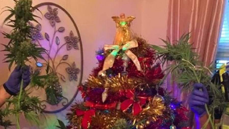Planta de canábis estava decorada como se fosse uma árvore de Natal